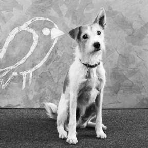 benji-office-dog
